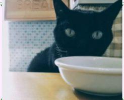 ドライフードを食べない猫