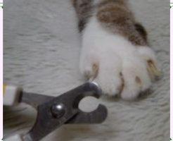 爪切りをされる猫の画像