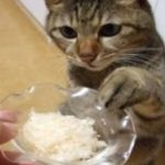 猫のウェットフードのおすすめ!無添加で安全な通販で人気なのは?