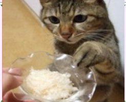 猫とウェットフード