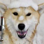 犬のシャンプーのおすすめランキング!オーガニックで人気なのは?