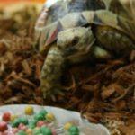 亀の餌でおすすめなのは?量や回数、与え方や臭いがないものをご紹介!