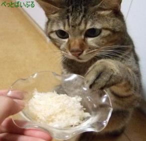 猫のエサをかえてみる