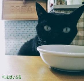 エサを食べない猫