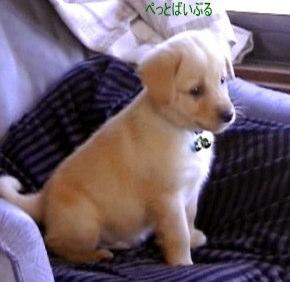 子犬画像-1