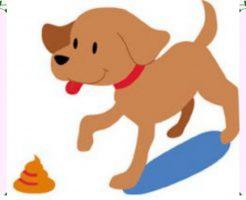 ウンチを食べる犬の画像