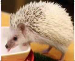 飼いやすい生き物の画像