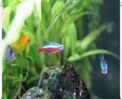 飼いやすい魚の画像