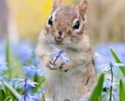 飼いやすい小動物の画像