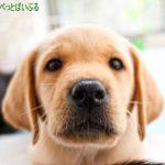 犬を飼う準備で必要な物とは?用意すべきグッズや環境、安く抑える方法!