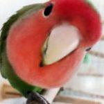 飼いやすい鳥ランキング!初心者でも簡単なおすすめの種類は?