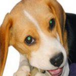 飼いやすい中型犬ランキング!初心者でも簡単なおすすめの種類は?