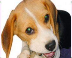 飼いやすい中型犬画像