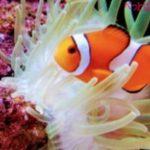 海水魚の飼育の方法や必要なもの、初心者におすすめな用品は?