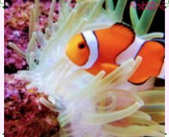 海水魚の飼育画像