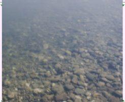 白濁りした水槽画像