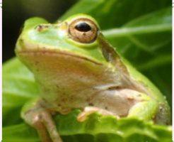 カエル画像1