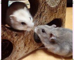 ネズミ画像1
