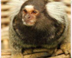 ペットの猿画像1