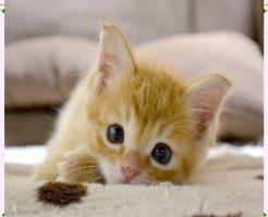 猫画像11