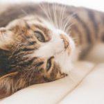 猫の熱中症の症状や対策、予防方法とは?応急処置やグッズも紹介!