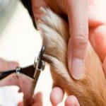 子犬の爪切りはいつから?頻度や方法、病院に行った場合の値段は?