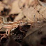カナヘビの餌!頻度や量、食べない時の対処法や虫以外のおすすめも!