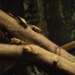コオロギを飼育!繁殖方法や餌、おすすめの飼育ケースもご紹介!