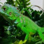 爬虫類の温室を自作!作り方や必要な材料、保温におすすめなのは?