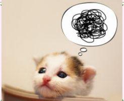 猫が嫌がる音