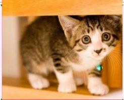 子猫画像1