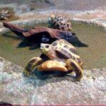 ヘルマンリクガメの飼い方!飼育環境や水深、水槽、餌の与え方も!