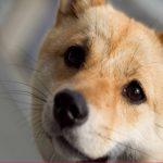 犬のくしゃみが止まらない時の原因や病気、対処法は?止め方も紹介!