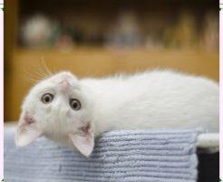 足を引きずる猫