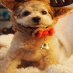 飼いやすい室内犬ランキング!初心者でも飼育できる種類や値段って?