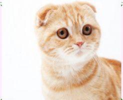 飼いやすい猫