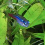 飼いやすい熱帯魚ランキング!初心者でも飼育できる種類や値段って?