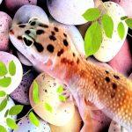 飼いやすい爬虫類ランキング!初心者でも飼育できる種類や値段って?