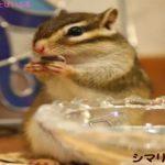 長生きするペットランキング!小動物の中でも寿命が長い種類は?
