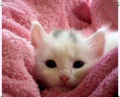 鼻づまりの猫