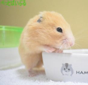 ハムスター画像6