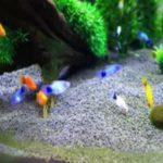 飼いやすい淡水魚ランキング!初心者でも飼育できる種類や値段って?