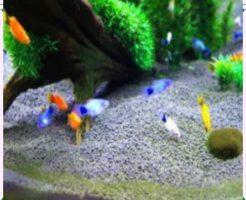 飼いやすい淡水魚