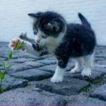 保健所で猫を引き取りする条件は?高齢者や初心者、室外で飼うのは?