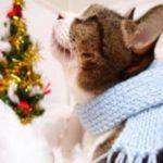クリスマスツリーの猫の対策は?登ったり倒したりできないおすすめの方法とは?
