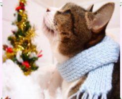 猫とクリスマスツリー画像