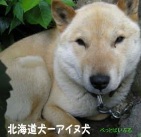 北海道犬画像
