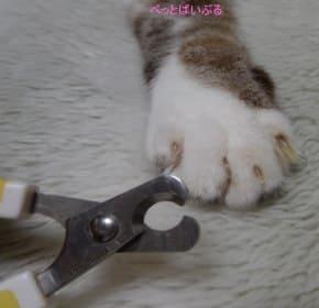 猫の爪切り画像