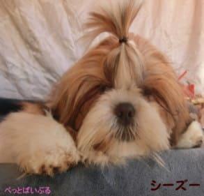 犬のイメージ画像1