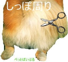 ポメラニアンの柴犬カット2